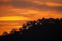 Τροπικός θόλος τροπικών δασών σειράς βουνών σε νότιο της Ταϊλάνδης Στοκ φωτογραφίες με δικαίωμα ελεύθερης χρήσης