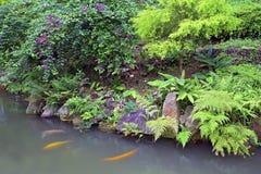 Τροπικός κήπος με τη λίμνη ψαριών koi Στοκ Εικόνα
