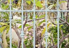 Τροπικός κήπος στο φως του ήλιου πίσω από τον περίκομψο επεξεργασμένο φράκτη μετάλλων Στοκ Εικόνες