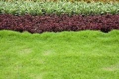 Τροπικός κήπος το καλοκαίρι στοκ εικόνες με δικαίωμα ελεύθερης χρήσης