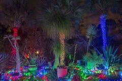 Τροπικός κήπος Χριστουγέννων στοκ εικόνα με δικαίωμα ελεύθερης χρήσης