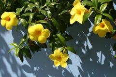 τροπικός κίτρινος λουλουδιών στοκ εικόνα