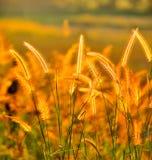 τροπικός κίτρινος λουλ&om Στοκ Εικόνες