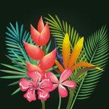 Τροπικός και exotics ανθίζει και βγάζει φύλλα διανυσματική απεικόνιση