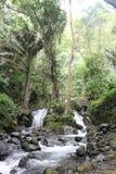 Τροπικός καταρράκτης στο τροπικό δάσος στοκ εικόνα