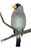 τροπικός κλαδίσκος πουλιών Στοκ φωτογραφία με δικαίωμα ελεύθερης χρήσης