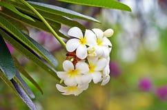 Τροπικός κύκλος λουλουδιών Στοκ Φωτογραφία