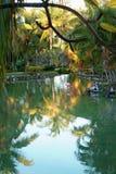 Τροπικός παράδεισος με το ρόδινο φλαμίγκο Στοκ εικόνες με δικαίωμα ελεύθερης χρήσης