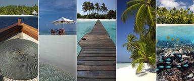 Τροπικός παράδεισος - οι Μαλδίβες στοκ φωτογραφία με δικαίωμα ελεύθερης χρήσης