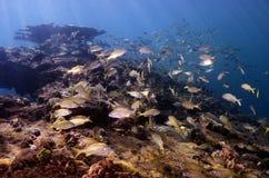 τροπικός υποβρύχιος σκοπέλων τοπίων ψαριών κοραλλιών Στοκ Φωτογραφίες