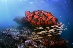 τροπικός υποβρύχιος σκοπέλων τοπίων ψαριών κοραλλιών Στοκ Φωτογραφία