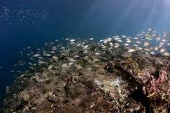 τροπικός υποβρύχιος σκοπέλων τοπίων ψαριών κοραλλιών Στοκ Εικόνες