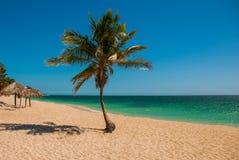 Τροπικός φοίνικας καρύδων στην παραλία με την κίτρινη άμμο Καραϊβική θάλασσα με το τυρκουάζ και μπλε νερό Κούβα Τρινιδάδ Ανκόνα B Στοκ Φωτογραφία