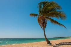 Τροπικός φοίνικας καρύδων στην παραλία με την κίτρινη άμμο Καραϊβική θάλασσα με το τυρκουάζ και μπλε νερό Κούβα Τρινιδάδ Ανκόνα B Στοκ Εικόνες