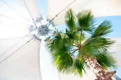 Τροπικός φοίνικας με την ελαφριά awning ομπρέλα κάτω από την αντανάκλαση ηλιοφάνειας μπλε ουρανού Στοκ Φωτογραφίες