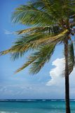 Τροπικός φοίνικας στην ακτή στο μπλε ουρανό με το άσπρο σύννεφο και το γαλαζοπράσινο ωκεάνιο υπόβαθρο Στοκ Φωτογραφίες