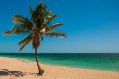 Τροπικός φοίνικας στην παραλία με την κίτρινη άμμο Καραϊβική θάλασσα με το τυρκουάζ και μπλε νερό Κούβα Τρινιδάδ Παραλία της Ανκό Στοκ Φωτογραφίες