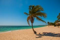 Τροπικός φοίνικας στην παραλία με την κίτρινη άμμο Καραϊβική θάλασσα με το τυρκουάζ και μπλε νερό Κούβα Τρινιδάδ Παραλία της Ανκό Στοκ φωτογραφίες με δικαίωμα ελεύθερης χρήσης