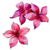 Τροπικός φοίνικας φύλλων της Χαβάης σε ένα ύφος watercolor που απομονώνεται απεικόνιση αποθεμάτων