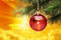 Τροπικός φοίνικας Χριστουγέννων Στοκ Εικόνες