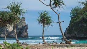 Τροπικός φοίνικας tectorius Pandanus στην παραλία μπροστά από το βράχο στην παραλία Atuh στο νησί Nusa Penida, Klungkung, Μπαλί απόθεμα βίντεο