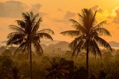 Τροπικός φοίνικας tre στην ανατολή Koh Samui, Ταϊλάνδη νησιών Στοκ φωτογραφία με δικαίωμα ελεύθερης χρήσης