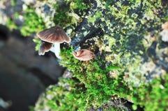 Τροπικό άγριο μανιτάρι στοκ φωτογραφία