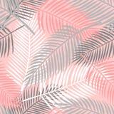 Τροπικό άνευ ραφής σχέδιο φύλλων θερινών φοινικών Στοκ Εικόνες