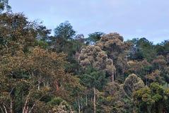 Τροπικό δάσος σε Sabah Μπόρνεο Στοκ Εικόνες