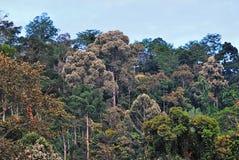 Τροπικό δάσος σε Sabah Μπόρνεο Στοκ Φωτογραφία
