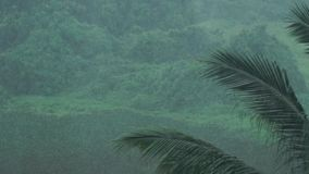 Τροπικό δάσος στην Ταϊλάνδη απόθεμα βίντεο