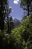 Τροπικό δάσος στη Νέα Ζηλανδία Στοκ φωτογραφίες με δικαίωμα ελεύθερης χρήσης
