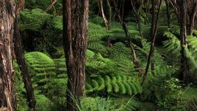 Τροπικό δάσος στο εθνικό πάρκο του Abel Tasman Στοκ Φωτογραφία