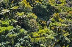 Τροπικό δάσος της Νέας Ζηλανδίας Στοκ Φωτογραφία