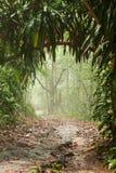 Τροπικό δάσος της Misty στοκ φωτογραφίες
