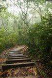 Τροπικό δάσος της Misty στοκ εικόνες