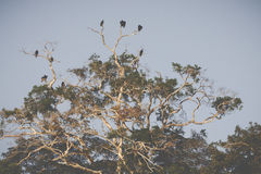 Τροπικό δάσος του Αμαζονίου, Περού, Νότια Αμερική Στοκ Φωτογραφία