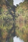 Τροπικό δάσος του Αμαζονίου, Περού, Νότια Αμερική Στοκ φωτογραφίες με δικαίωμα ελεύθερης χρήσης