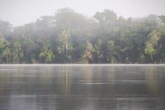 Τροπικό δάσος του Αμαζονίου, Περού, Νότια Αμερική Στοκ εικόνες με δικαίωμα ελεύθερης χρήσης