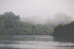 Τροπικό δάσος του Αμαζονίου, Περού, Νότια Αμερική Στοκ εικόνα με δικαίωμα ελεύθερης χρήσης