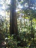 Τροπικό δάσος του Αμαζονίου Στοκ Φωτογραφία