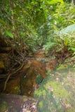 Τροπικό δάσος του Μπόρνεο Στοκ Εικόνες