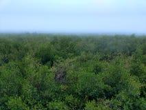 Τροπικό δάσος το πρωί Στοκ Εικόνα