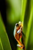 Τροπικό δάσος, φυσικό περιβάλλον, εξωτικός βάτραχος στοκ φωτογραφίες