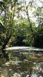 Τροπικό δάσος στοκ εικόνα