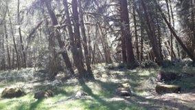 Τροπικό δάσος Hoeh Στοκ Φωτογραφία