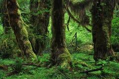 Ολυμπιακό εθνικό πάρκο, ΗΠΑ Στοκ φωτογραφία με δικαίωμα ελεύθερης χρήσης
