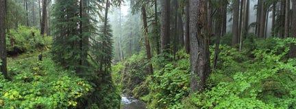 Τροπικό δάσος Hoh στοκ εικόνα