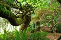 Τροπικό δάσος Hoh Στοκ Εικόνες