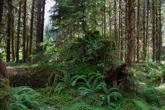 Τροπικό δάσος Hoh στοκ φωτογραφία με δικαίωμα ελεύθερης χρήσης